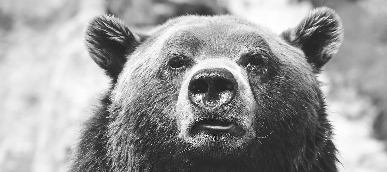 wildlife_tv_newsslide